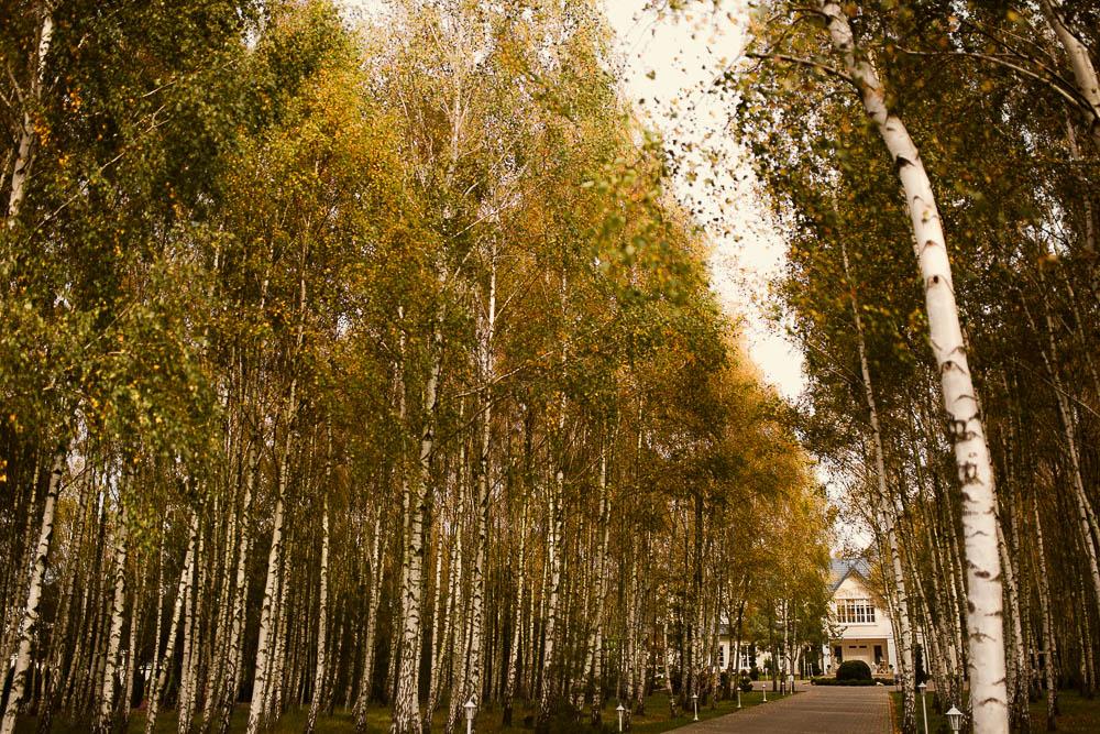 złotopolska dolina brzozy