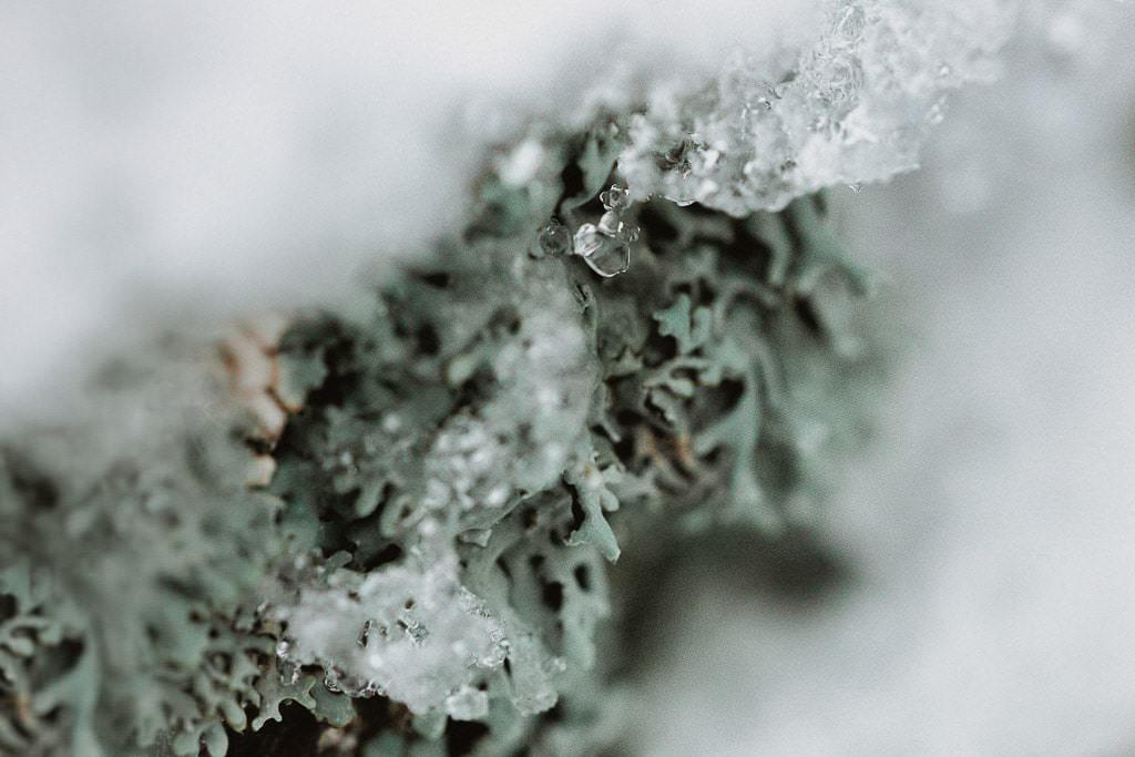 śnieg zbliżenie