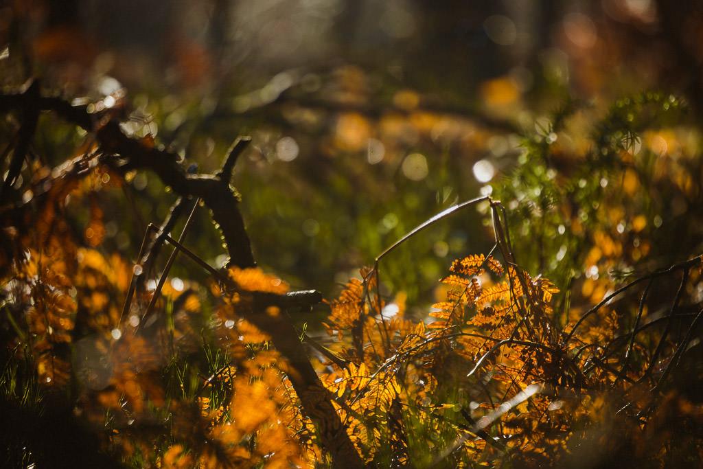 Angelika + Michał, plener jesienny, podwójna ekspozycja 29