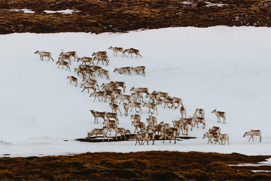 Podróż: Kolory Islandii 131