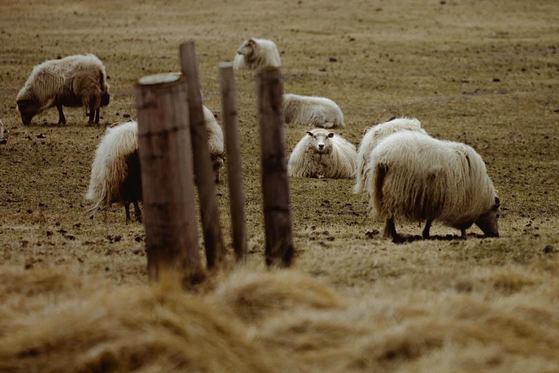 Podróż: Kolory Islandii 10