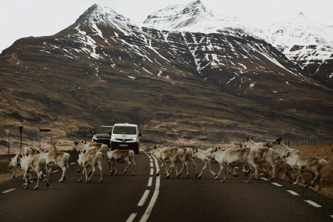 Podróż: Kolory Islandii 25
