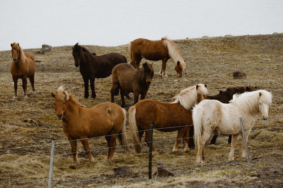 Podróż: Kolory Islandii 36