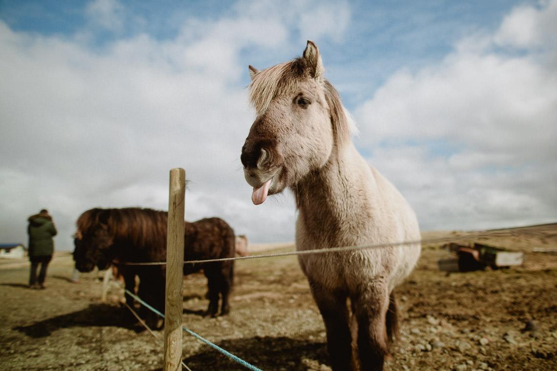 Podróż: Kolory Islandii 37